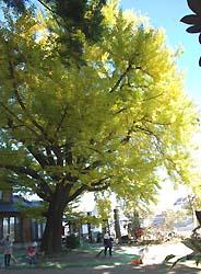 恩徳寺(2010年11月中旬)