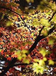 出早公園(2003年10月下旬)