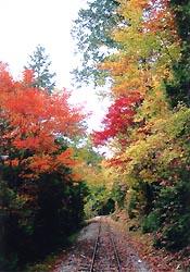 赤沢自然休養林(提供上松町観光協会)