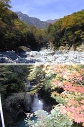 シオジ平自然園(提供飯島町産業振興課)
